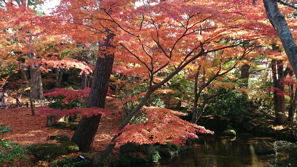 山崎山のふもとの紅葉2