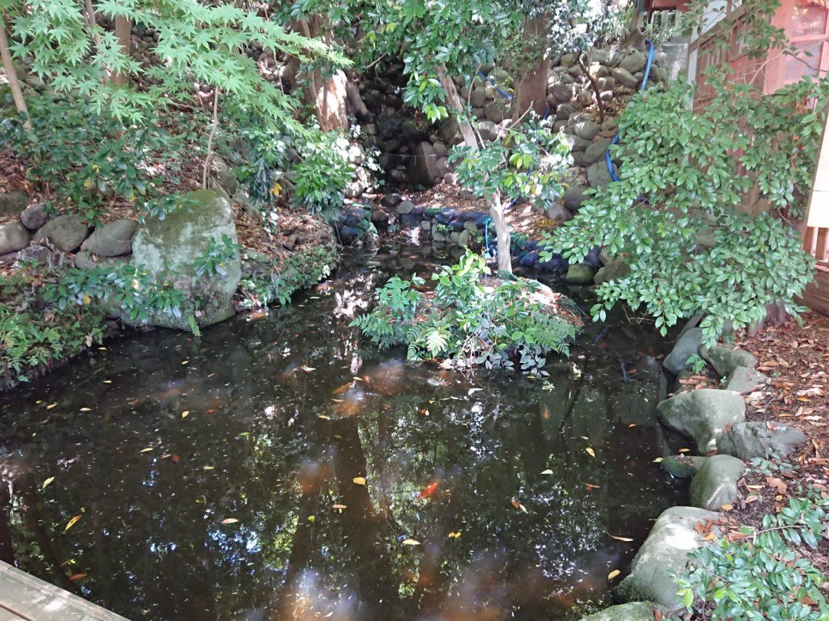 湧き水と御手洗池